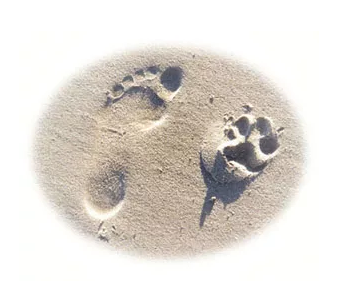 Human and animal footprints in the sand