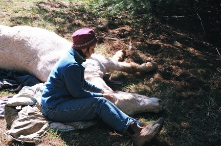 "Sandy Rakowitz of One Heart Healing Center, Virigina, at the head of the the senior gelding, ""Sunny"", who is lying on the ground"